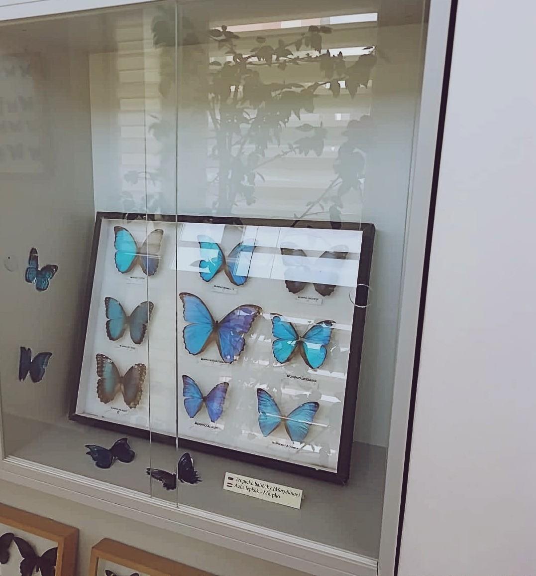Výstava motýľov 2019